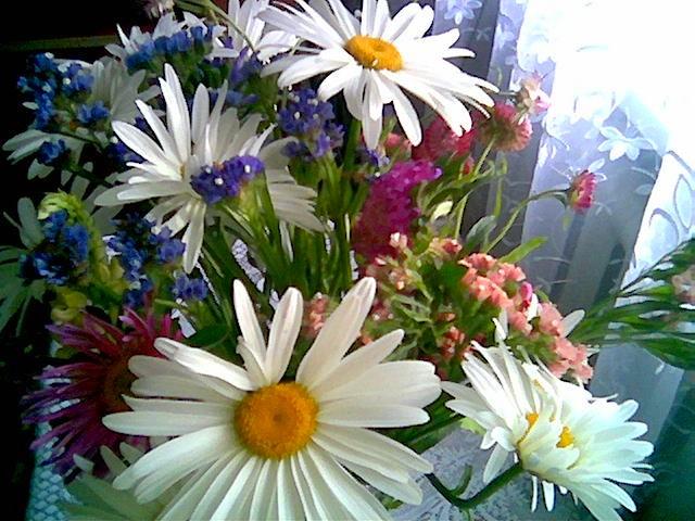 Цветы любительские фото